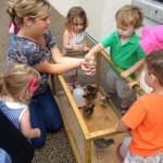 Touching baby chicks at a childcare center