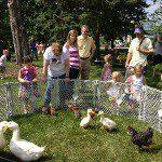Animals at a school picnic